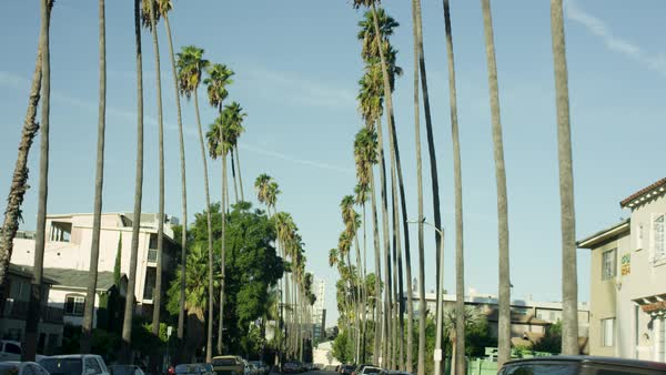 Palm trees on both the sides of a city street against blue sky Royalty-free stock video