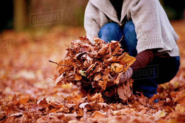 A woman gathering leaves in autumn time, close up Royalty-free stock photo