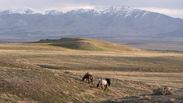 View of the Utah desert with wild horses and snow capped mountains. Royalty-free stock video