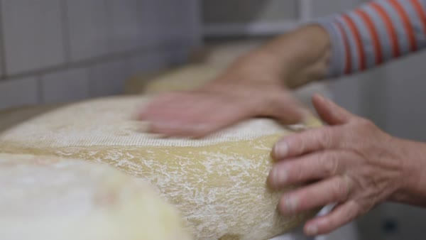 Woman farmer making cheese at dairy farm Royalty-free stock video