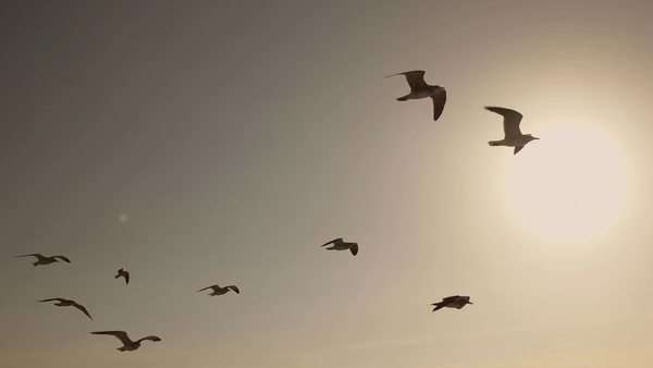 Slow motion shot of flock of seagulls and birds flying high in the sky Royalty-free stock video