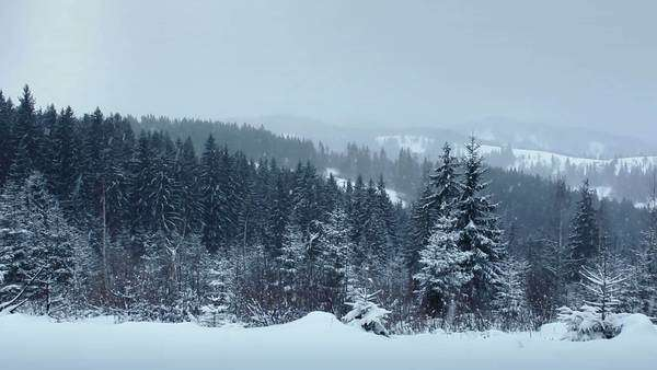Snow Falling in Forest Royalty-free stock video