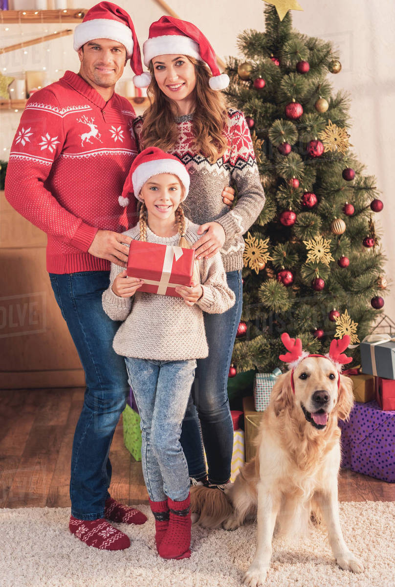 Family in santa hats with dog in deer horns standing near christmas tree  with gifts stock photo