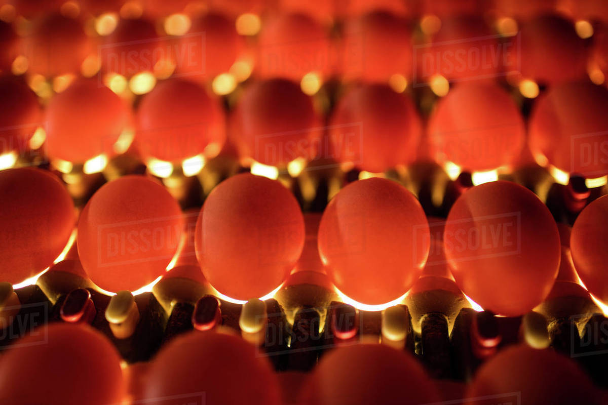 Eggs In Lighting Control Quality Egg Factory Stock Photo