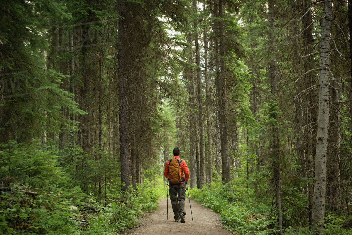 Hiker With Backpack Walking On The Road Through The Forest Stock