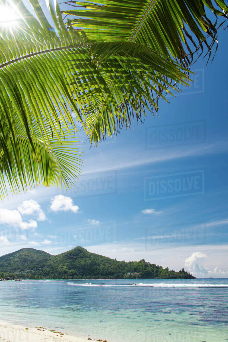 The sun shining through palm leaves at Baie Lazar, Mahe, Seychelles, Indian Ocean, Africa Royalty-free stock photo