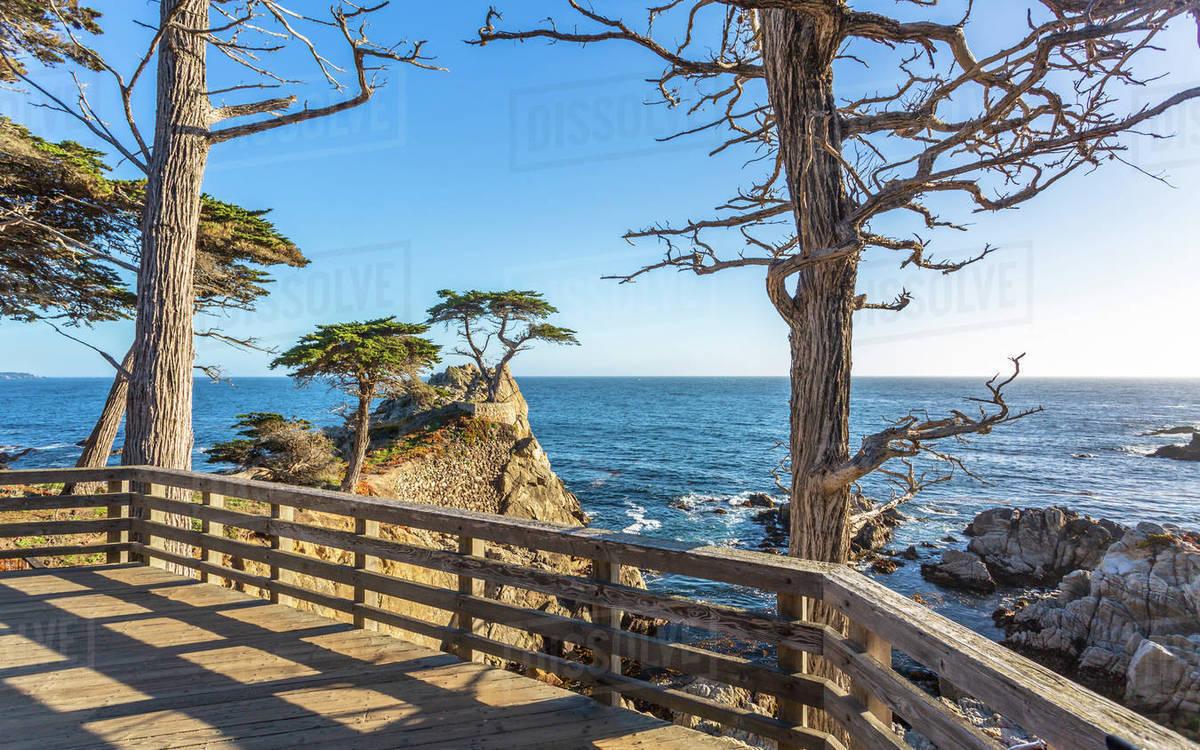 Carmel Bay Lone Cypress At Pebble