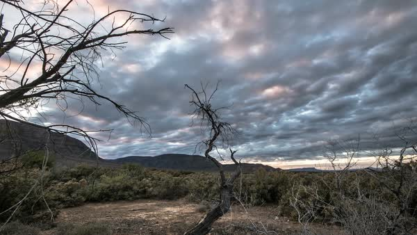 Desert trees with cloudy sky timelapse Royalty-free stock video