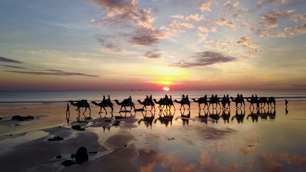 Aerial view of camels on Cable Beach in Broome Australia Royalty-free stock video