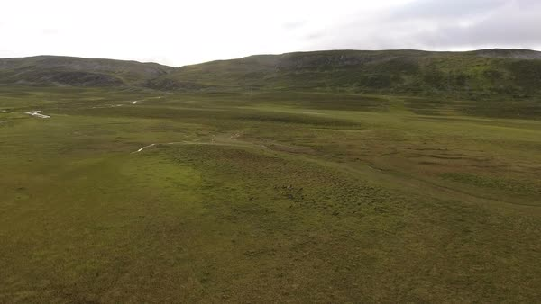 Herd of reindeer running through Tundra, seen from drone aerial view Royalty-free stock video