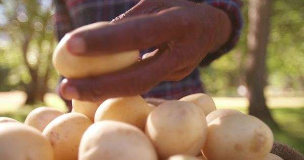 Farmer checking potato from pile of potatoes in bag Royalty-free stock video