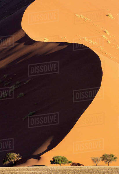 Africa, Namibia, Namib-Naukluft Park. Side-lit sand dune and trees. Royalty-free stock photo