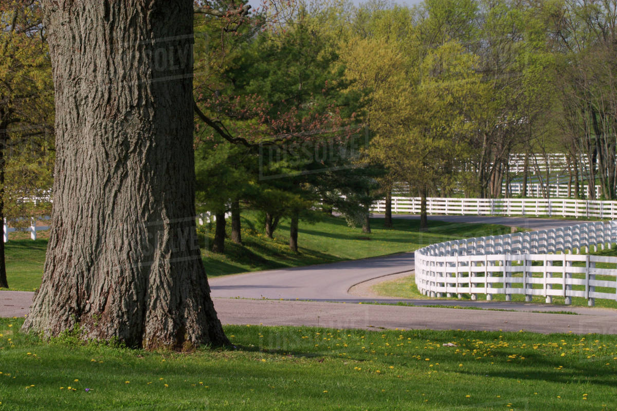 Winding fences, Kentucky Horse Park, Lexington, Kentucky stock photo