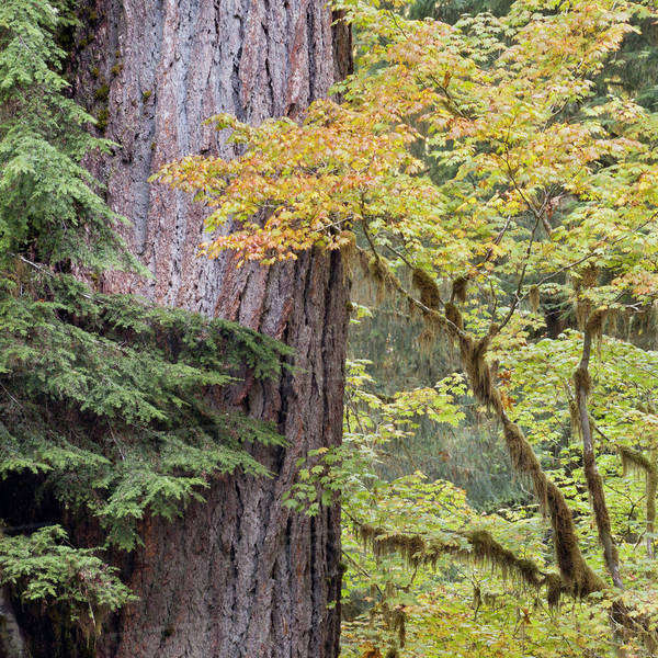 USA, Washington, Quinault. Forest scenic. Royalty-free stock photo