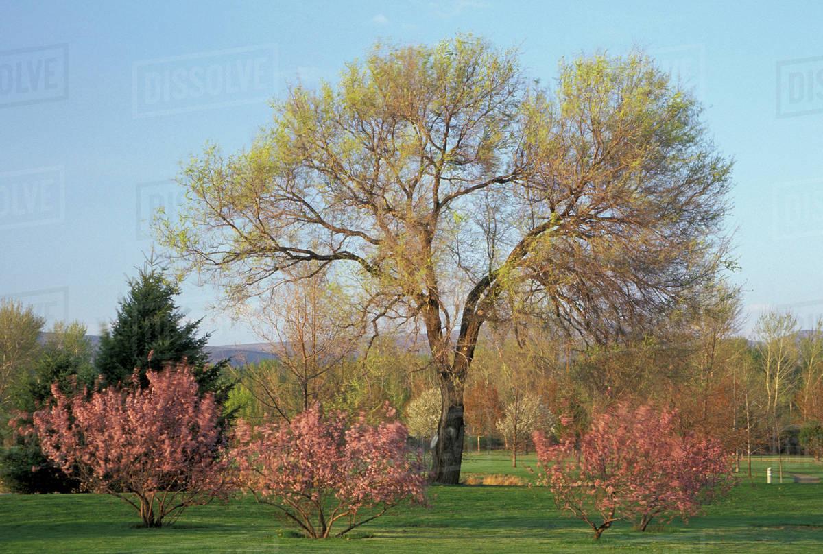 Na Usa Washington Yakima Yakima Area Arboretum Flowering Trees
