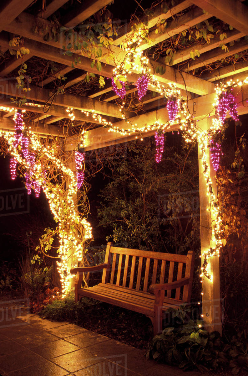 USA, Washington State, Bellevue Botanical Garden. Grape arbor in ...