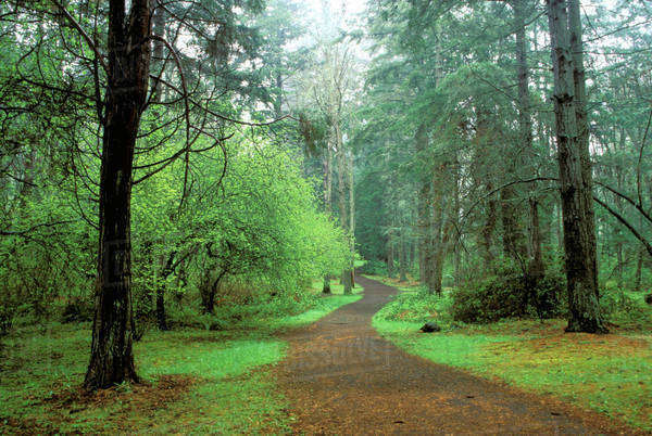 North America, USA, Washington State, Seattle. Trees with pathway at Lincoln Park Royalty-free stock photo