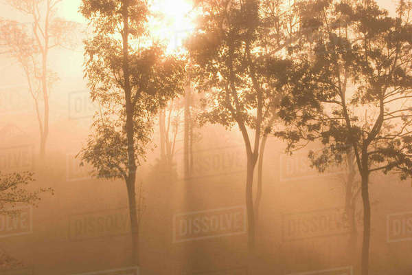 Asia, Thailand, Mist in the tropical rain forest Royalty-free stock photo