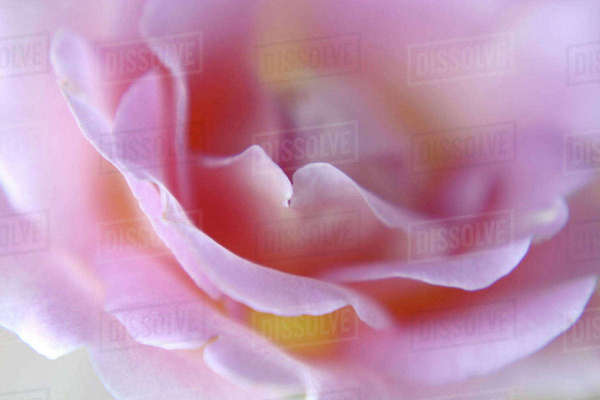 Rose Abstract Royalty-free stock photo