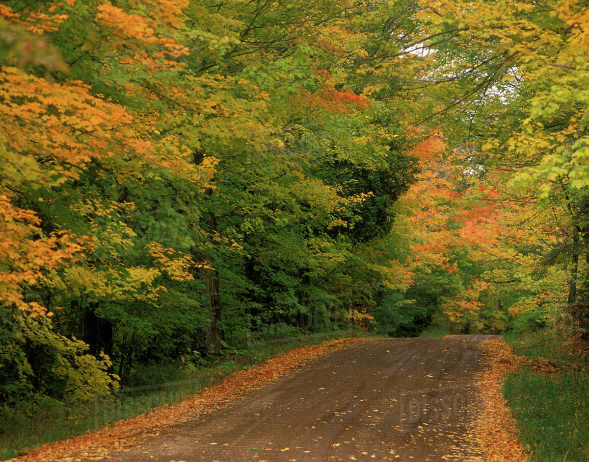 USA, Minnesota, Superior National Forest, Fall Colors - Stock Photo ...