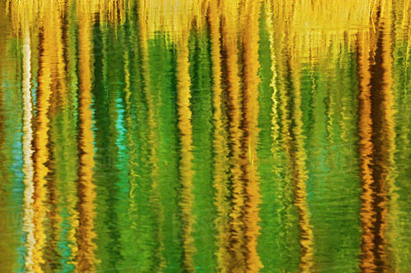 Canada, Alberta, Elk Island National Park. Aspen trees reflected in a pond. Rights-managed stock photo