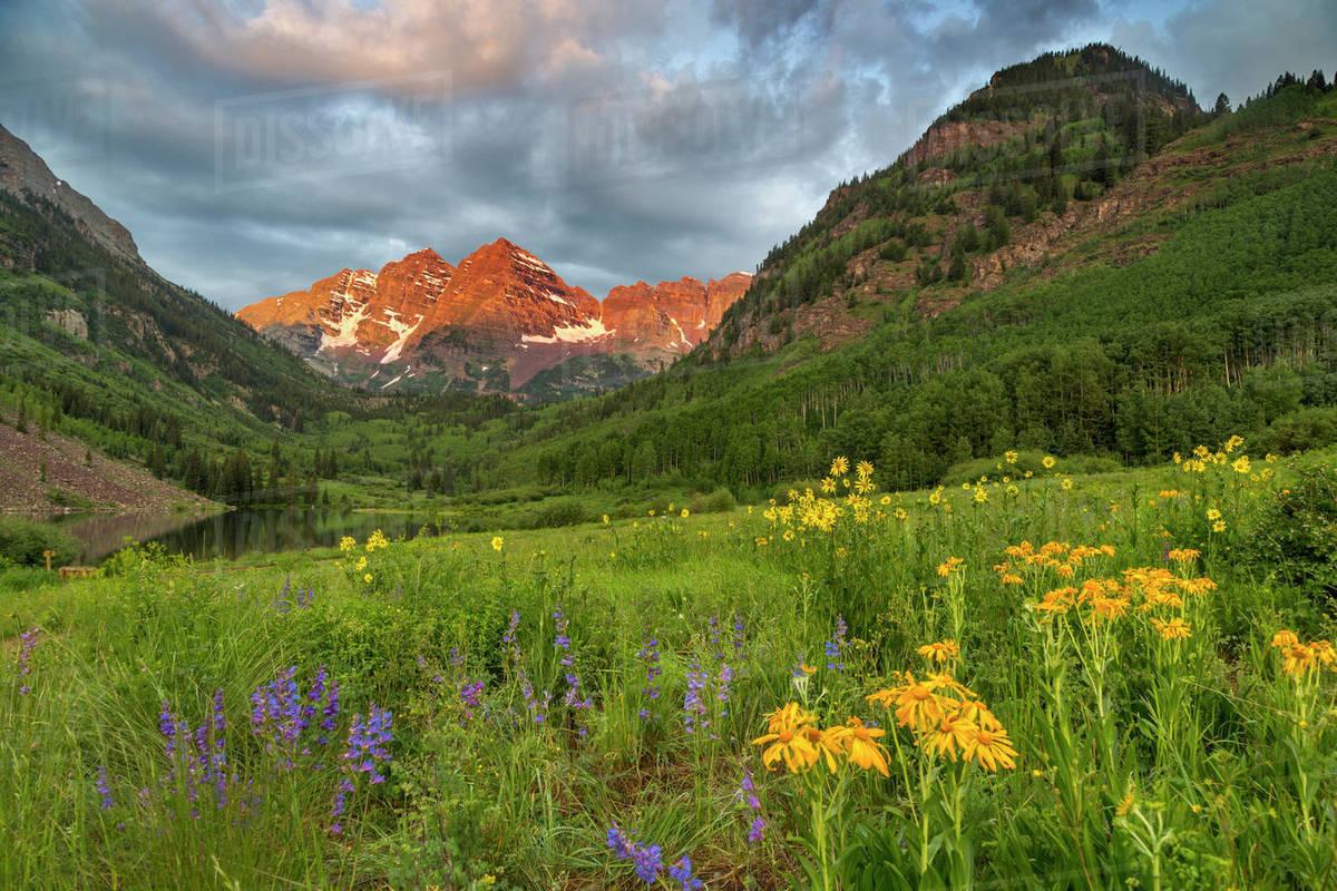 Maroon Bells Reflect Into Calm Maroon Lake Near Aspen Colorado D256 40 157