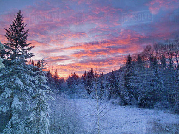 Vivid sunset paints the sky above wintery meadow in the Flathead National Forest of Montana. Rights-managed stock photo
