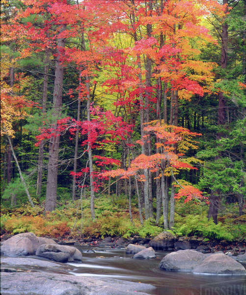 USA, New York, Autumn in the Adirondack Mountains Rights-managed stock photo