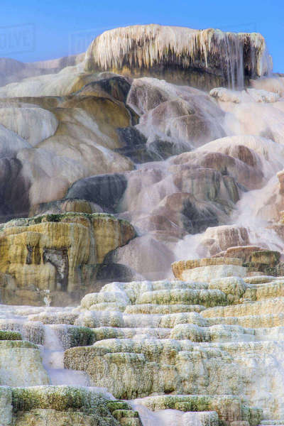 Palette Springs at Mammoth Terrace in Yellowstone National Park, Wyoming, USA. Rights-managed stock photo