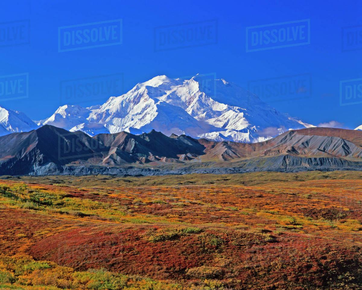 Mt . McKinley Denali National Park , Alaska. stock photo Images Of Mt Mckinley on