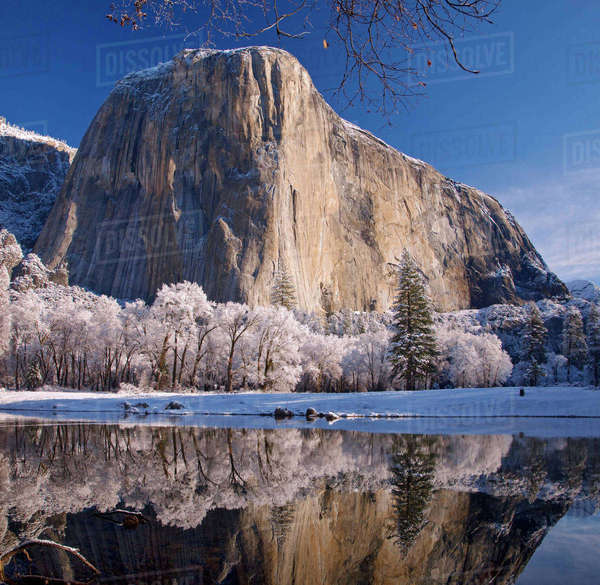 El Capitan reflects into the Merced River in winter in Yosemite National Park, California, USA Rights-managed stock photo