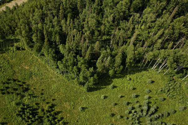 Aerial view of trees and field Royalty-free stock photo