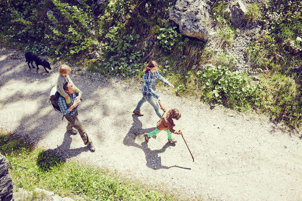 Family walking through forest, dog walking behind, elevated view Royalty-free stock photo
