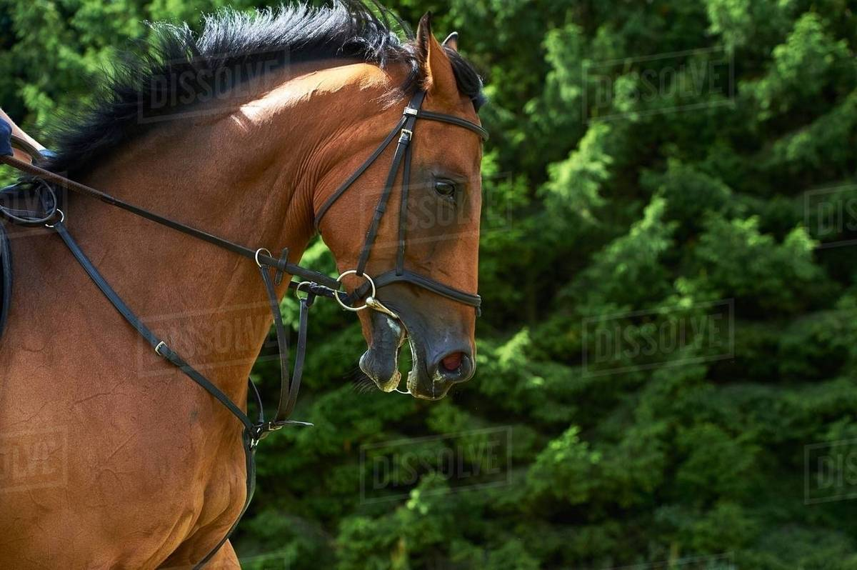 Cropped Side View Of Horses Head And Shoulders Stock Photo Dissolve