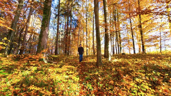 WS POV Woman Hiking In Forest / Starnberg, Bavaria, Germany Royalty-free stock video