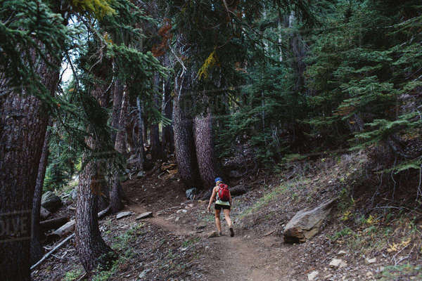 Woman hiking through forest, rear view, Mineral King, Sequoia National Park, California, USA Royalty-free stock photo