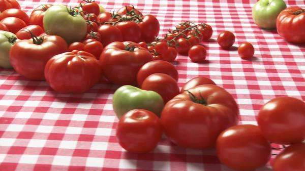 Fresh tomatoes and spaghetti with tomato sauce Royalty-free stock video