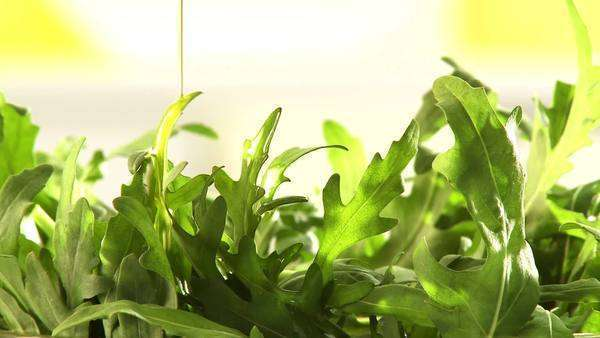 Sprinkling rocket salad with olive oil Royalty-free stock video