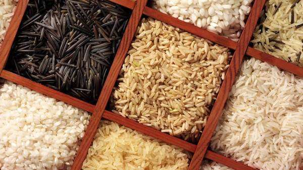 Various types of rice in a sprouting box Royalty-free stock video