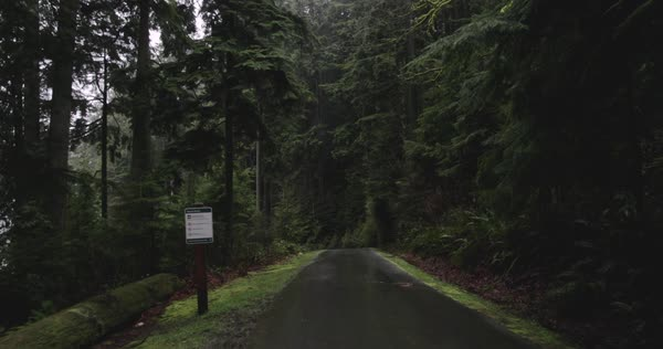Point-of-view shot of a road in a forest from a moving car Royalty-free stock video