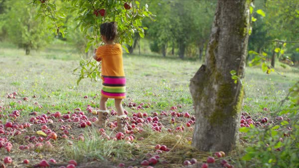 Young girl in Fall picking apple off tree Royalty-free stock video