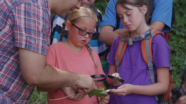 Kids at summer camp looking at leaf on nature walk Royalty-free stock video