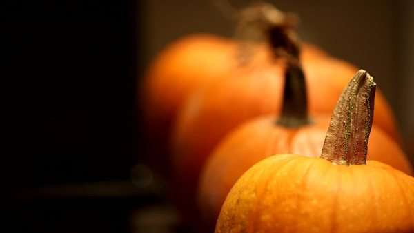 Rack focus shot of pumpkins lined up Royalty-free stock video