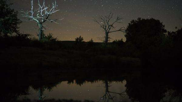Timelapse view of dead Chestnut tree and stars (version) Royalty-free stock video