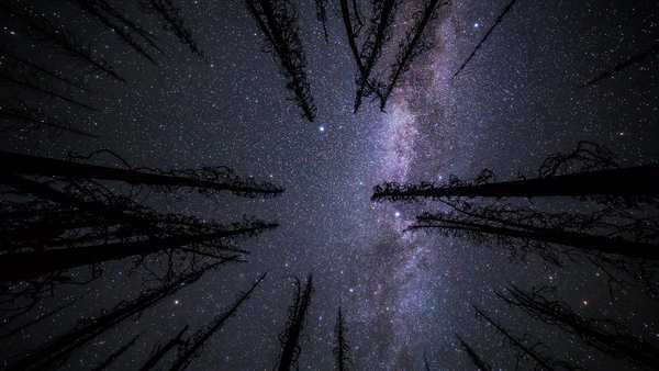 Timelapse of Milky Way through a forest canopy in British Columbia, Canada Royalty-free stock video