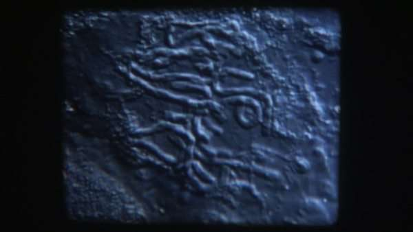 16mm microscopic film of cell division. Royalty-free stock video