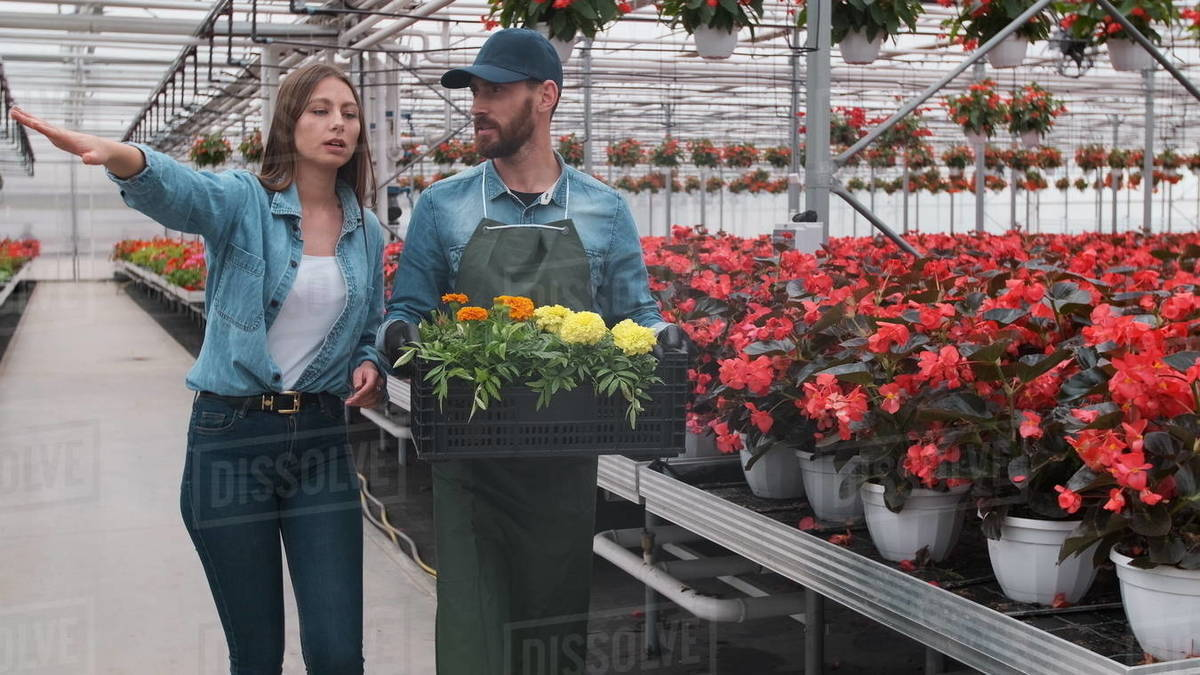 Woman Buying Flowers in a Sunlit Garden Shop. 4K. Young woman shopping for decorative plants on a sunny floristic greenhouse market. Home and Garden concept Royalty-free stock photo