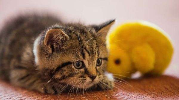 Image result for Baby cat