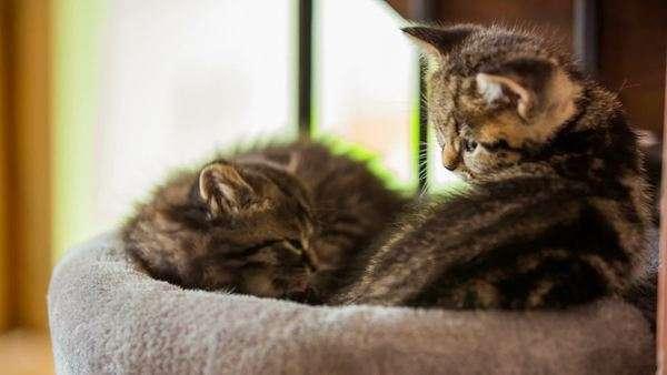 cat friendly furniture singapore