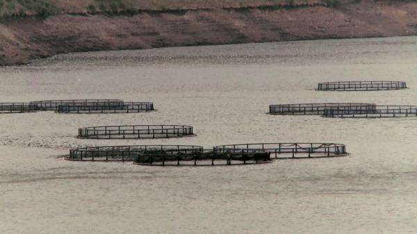 Large fish farms in a river Rights-managed stock video